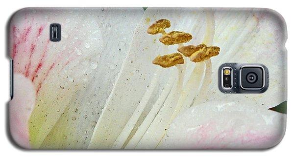 Amaryllis Belladonna Galaxy S5 Case