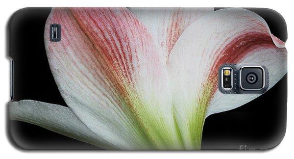 Amaryllis Galaxy S5 Case by Judy Whitton