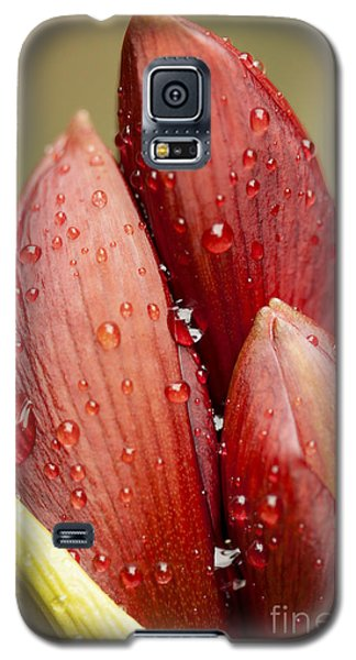 Amaryllis Galaxy S5 Case