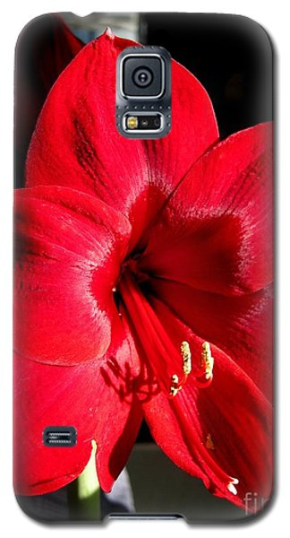 Galaxy S5 Case featuring the photograph Amaryllis Named Black Pearl by J McCombie