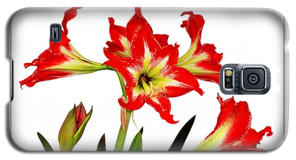 Amaryllis On White Galaxy S5 Case by David Perry Lawrence