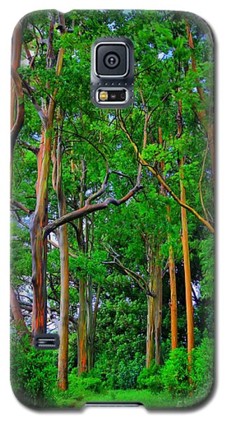 Amazing Rainbow Eucalyptus Galaxy S5 Case by DJ Florek