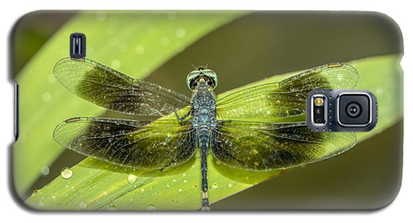 Amazon Dragon Fly Galaxy S5 Case