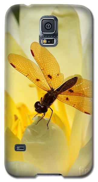 Amber Dragonfly Dancer Galaxy S5 Case