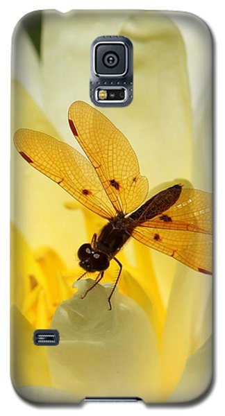 Amber Dragonfly Dancer Galaxy S5 Case