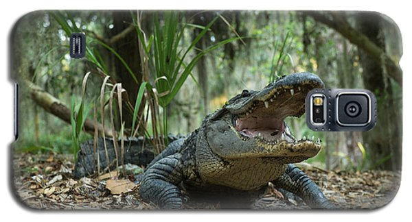 American Alligator (alligator Galaxy S5 Case by Pete Oxford