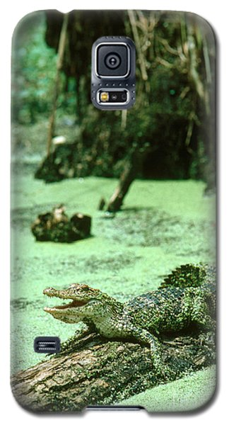 American Alligator Galaxy S5 Case by Gregory G. Dimijian, M.D.
