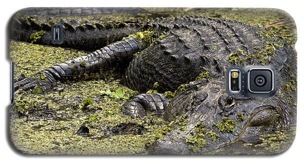 American Alligator Smile Galaxy S5 Case