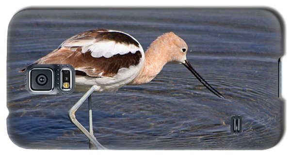 Galaxy S5 Case featuring the photograph American Avocet by Bob and Jan Shriner