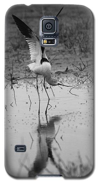American Avocet Reflection Galaxy S5 Case