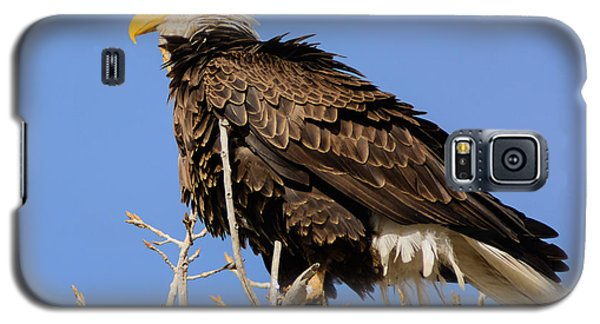 Galaxy S5 Case featuring the photograph American Bald Eagle Standing Proud by Stephen  Johnson
