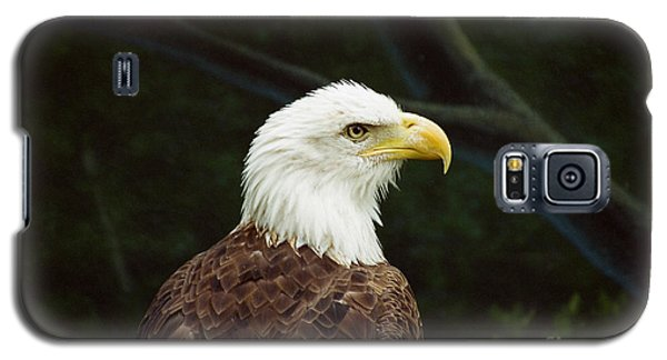 American Bald Eagle Galaxy S5 Case by Vinnie Oakes