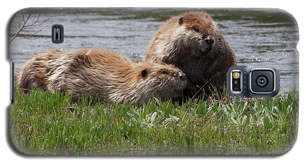 American Beaver Pair Galaxy S5 Case