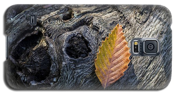 Galaxy S5 Case featuring the photograph American Beech Leaf by Andrew Pacheco