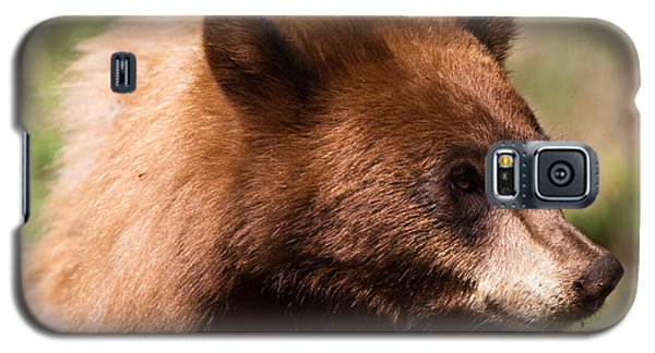 American Black Bear Galaxy S5 Case