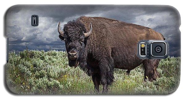 American Buffalo Or Bison In Yellowstone Galaxy S5 Case
