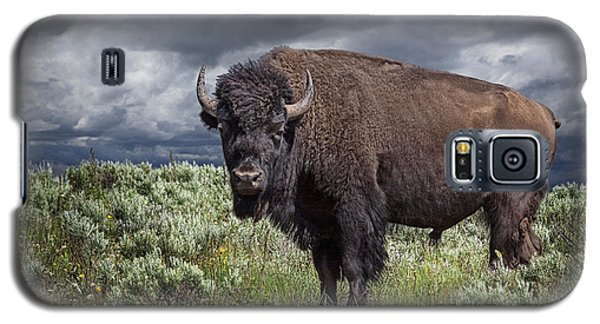 American Buffalo Or Bison In Yellowstone Galaxy S5 Case