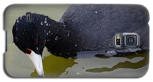 Galaxy S5 Case featuring the photograph American Coot by Debra Martz