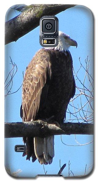 American Eagle Galaxy S5 Case by Susan Carella