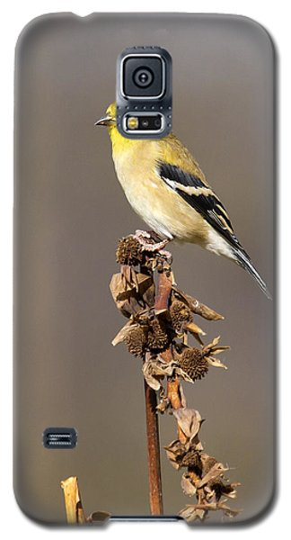 American Goldfinch 9 Galaxy S5 Case by David Lester