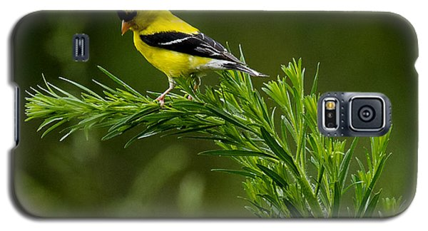 American Goldfinch Delight Galaxy S5 Case
