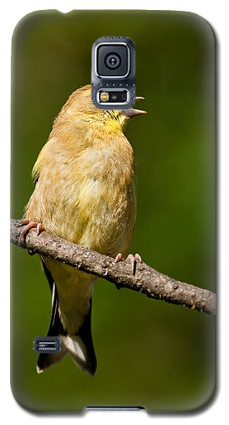 American Goldfinch Singing Galaxy S5 Case by Jeff Goulden