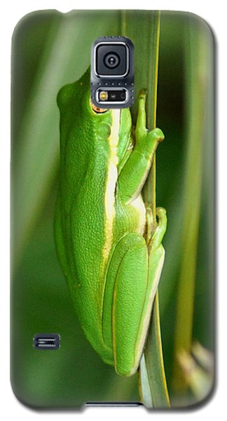 American Green Tree Frog Galaxy S5 Case by Kim Pate