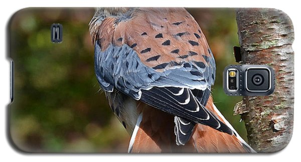 Galaxy S5 Case featuring the photograph American Kestral Portrait by Rodney Campbell