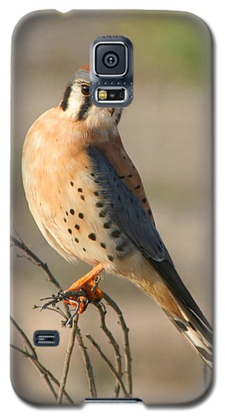 Galaxy S5 Case featuring the photograph American Kestrel by Bob and Jan Shriner