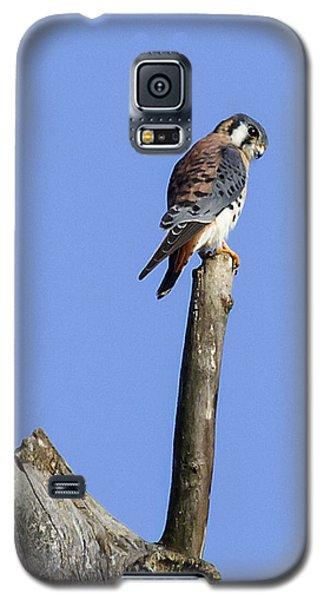 American Kestrel Galaxy S5 Case by David Lester