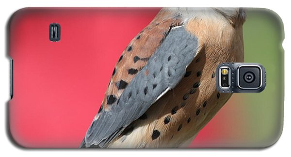 Galaxy S5 Case featuring the photograph American Kestrel by Nathan Rupert
