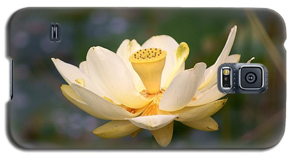 Galaxy S5 Case featuring the photograph American Lotus by B Wayne Mullins