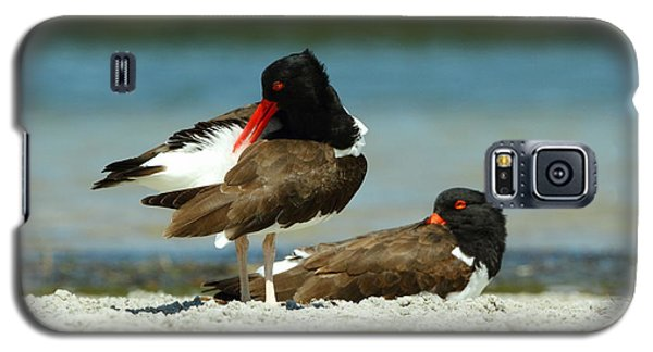 American Oystercatcher Grooming Galaxy S5 Case