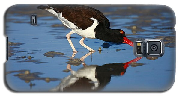 Galaxy S5 Case featuring the photograph American Oystercatcher Mirror by John F Tsumas
