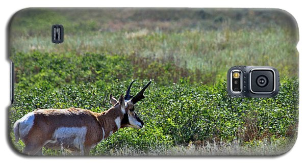Galaxy S5 Case featuring the photograph American Pronghorn Buck by Karon Melillo DeVega