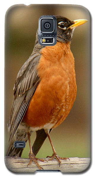 Galaxy S5 Case featuring the photograph American Robin by Bob and Jan Shriner