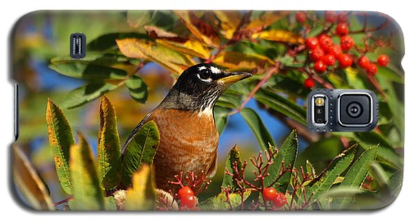 American Robin Galaxy S5 Case by James Peterson