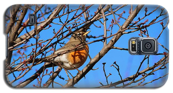Galaxy S5 Case featuring the photograph American Robin by Rima Biswas