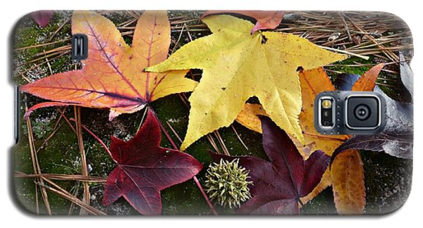 Galaxy S5 Case featuring the photograph American Sweetgum Autumn Display by William Tanneberger