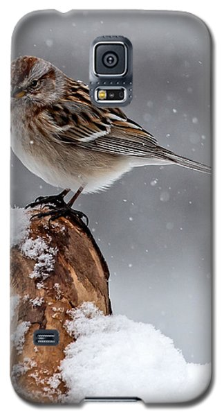 American Tree Sparrow In Snow Galaxy S5 Case
