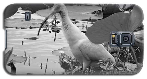 American White Ibis Black And White Galaxy S5 Case by Dan Sproul
