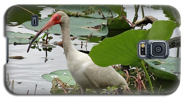 American White Ibis In Brazos Bend Galaxy S5 Case by Dan Sproul
