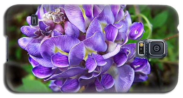 Galaxy S5 Case featuring the photograph American Wisteria by William Tanneberger