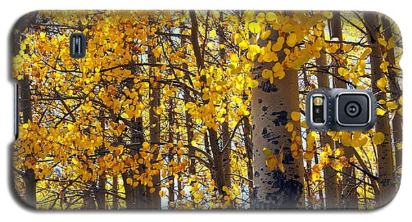 Among The Aspen Trees In Fall Galaxy S5 Case
