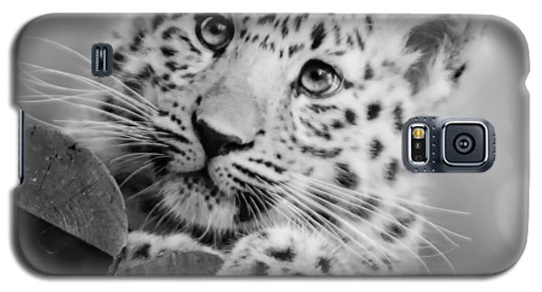 Galaxy S5 Case featuring the photograph Amur Leopard Cub Portrait by Chris Boulton