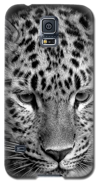 Amur Leopard In Black And White Galaxy S5 Case