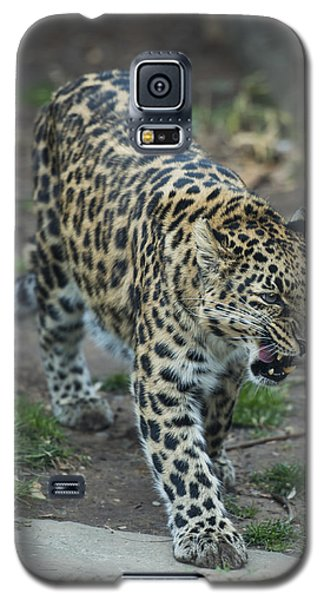 Amur Leopard Galaxy S5 Case by Phil Abrams