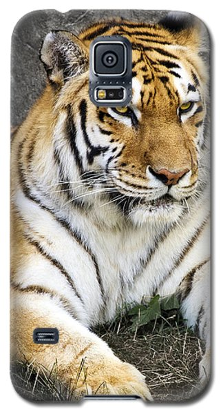 Amur Tiger Galaxy S5 Case