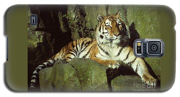 Amur Tiger Galaxy S5 Case