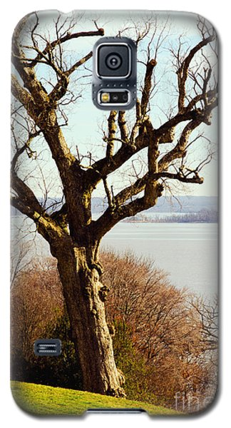 An Ancient Native Chinquapin Oak Tree Galaxy S5 Case by MaryJane Armstrong